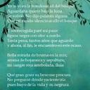 Verónica Calvo-Ocaso en el bosque-soneto