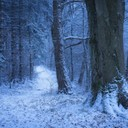 270741-nature-landscape-winter-Germany-forest-snow-path-cold-trees